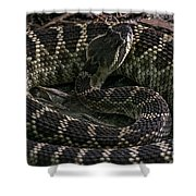 Prairie Rattlesnake Shower Curtain