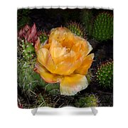 Prairie Rose II Shower Curtain