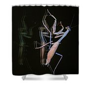 Praying Mantis 2 Shower Curtain