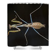 Praying Mantis 4 Shower Curtain