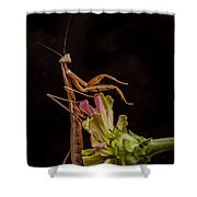 Praying Mantis Atop Zinnia Shower Curtain