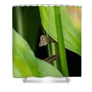 Praying Mantis Peekaboo Shower Curtain