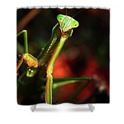 Praying Mantis Portrait Shower Curtain