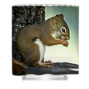Praying Squirrel Shower Curtain