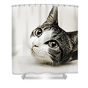 Precious Kitty Shower Curtain by Andee Design