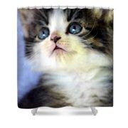 Precious Kitty Shower Curtain