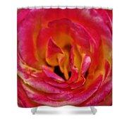 Precious Rose Shower Curtain