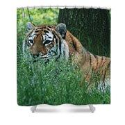 Predator In The Grass Shower Curtain