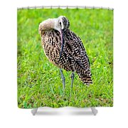 Preening Curlew Shower Curtain