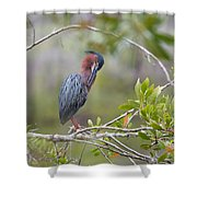 Preening Greenie Shower Curtain