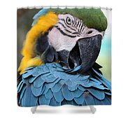 Preening Macaw Shower Curtain