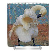 Preening Swan With Berries Shower Curtain