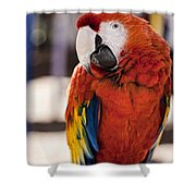 Pretty Bird 2 Shower Curtain