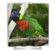 Pretty Bird Shower Curtain