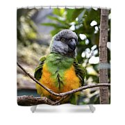 Pretty Bird Shower Curtain