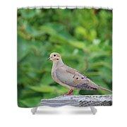 Pretty Dove Shower Curtain