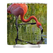 Pretty Flamingo Shower Curtain