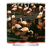 Pretty Flamingos Shower Curtain