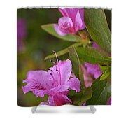 Pretty Fuschia Rhododendron Shower Curtain