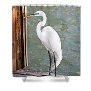 Pretty Great Egret Shower Curtain