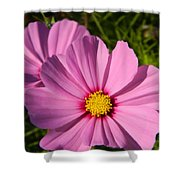 Pretty In Pink Cosmos Shower Curtain