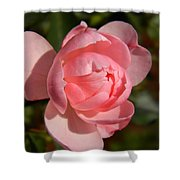 Pretty In Pink Rose Bud Shower Curtain