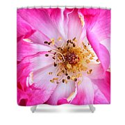 Pretty In Pink Rose Close Up Shower Curtain