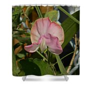 Pretty In Pink Sweet Pea Shower Curtain