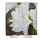 Pretty In White Azalea  Shower Curtain