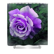 Pretty Lilac Rose Shower Curtain