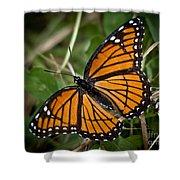 Pretty Monarch Shower Curtain