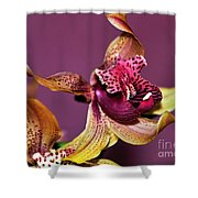 Pretty Orchid On Pink Shower Curtain