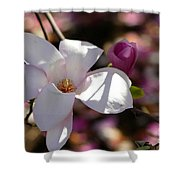 Pretty Pale Pink Magnolia Shower Curtain