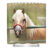 Pretty Palomino Horse Photography Shower Curtain