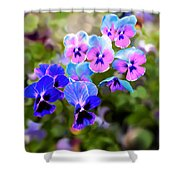 Pretty Pansies 2 Shower Curtain