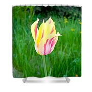 Pretty Pastel Tulip Shower Curtain