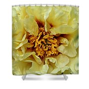 Pretty Peony  Shower Curtain