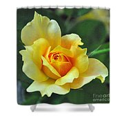 Pretty Petals Shower Curtain