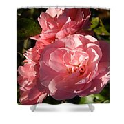 Pretty Pink Bunch Of Roses Shower Curtain