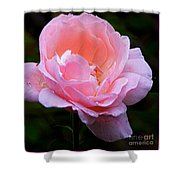 Pretty Pink Rose Shower Curtain