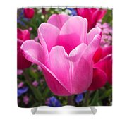 Pretty Pink Tulip And Field With Flowers And Tulips Shower Curtain