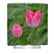 Pretty Pink Tulips Shower Curtain