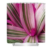 Pretty Plant Leaves 2 Shower Curtain