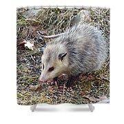 Pretty Possum Shower Curtain