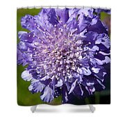 Pretty Purple Flower Shower Curtain