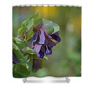 Pretty Purple Flowers In Ireland Shower Curtain