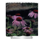 Pretty Purple Ladies Shower Curtain