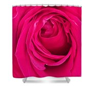 Pretty Red Rose  Shower Curtain