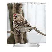 Pretty Redpoll Shower Curtain