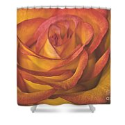 Pretty Rose Shower Curtain